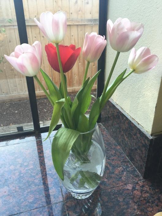 Tulips 05.11.2016